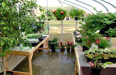How to Enhance Your Garden
