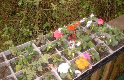 Love Your Home Garden